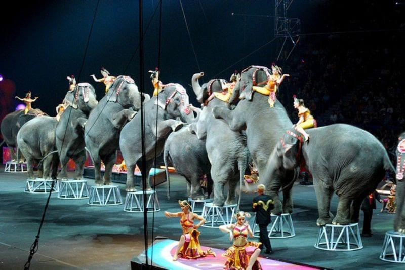 Elefantes-en-un-circo-en-una-i_54392837668_54028874188_960_639